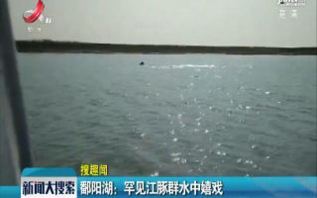 鄱阳湖:罕见江豚群水中嬉戏