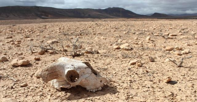 科学家警告:地球提早进入第六次物种大灭绝,人类的时间不多了