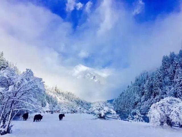 阿坝下雪风景区