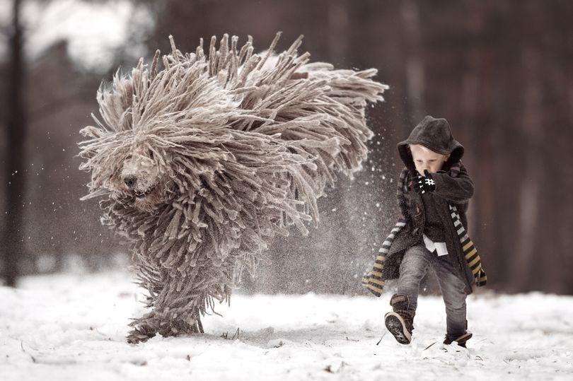 波利犬与可蒙犬_可蒙犬和波利犬_可蒙犬