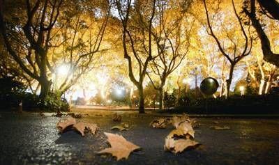 很贴心!今年秋天杭州这15条路不扫落叶,可以让你随意!图片