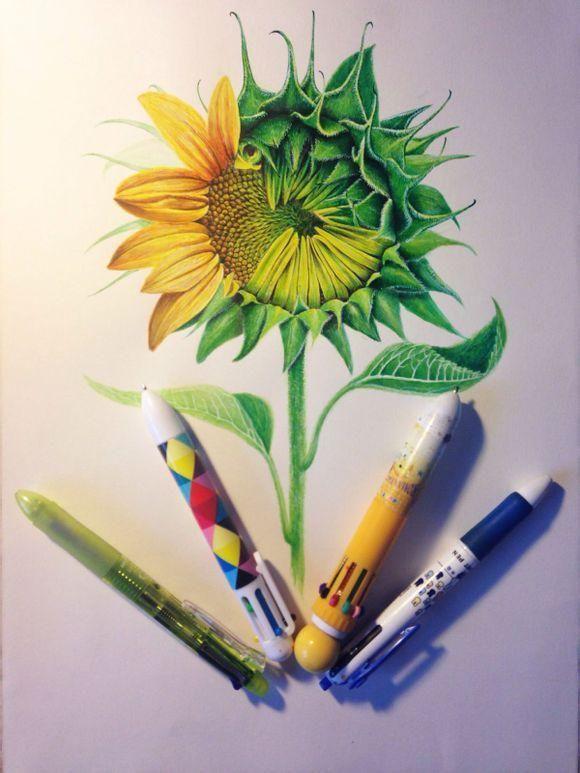 圆珠笔手绘向日葵过程-希望