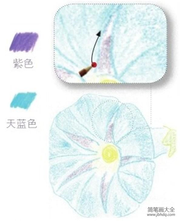 儿童简笔画实用教程(彩铅牵牛花的绘画步骤)