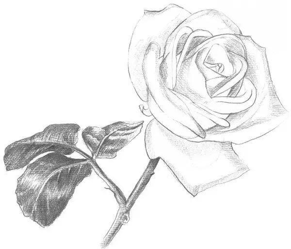 素描初级丨玫瑰花步骤图,想学的来拿