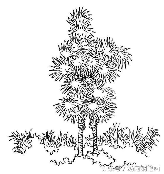 这次绘画的是棕榈树.不同于其他的树叶,它的主干只有一根.图片