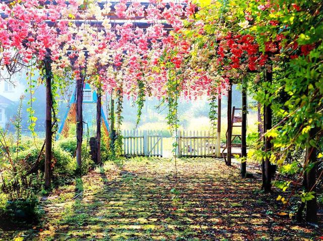 宠辱不惊,看庭前花开花落;去留无意,望天上云卷云舒.