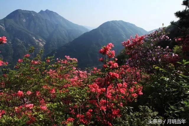 美丽的桃花冲风景区