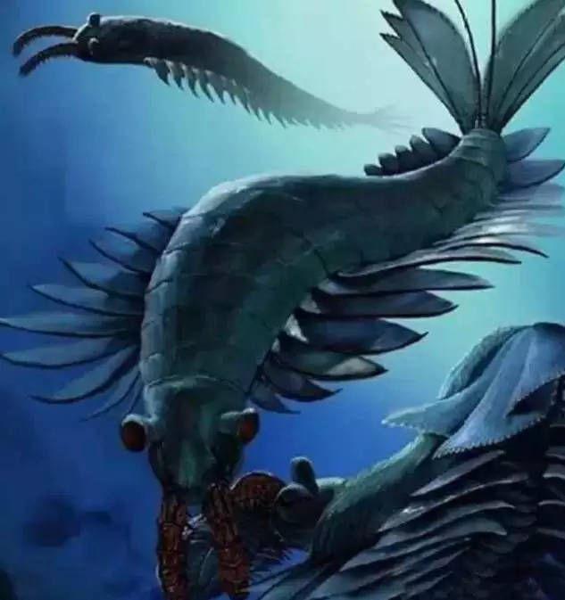 内射粉嫩蝎鱼_壁纸 动物 鱼 鱼类 633_673
