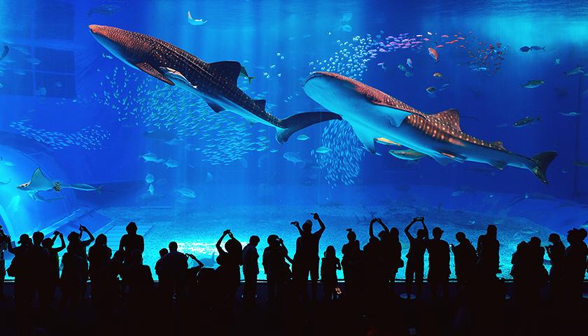 海洋世界娱乐公司的总部位于佛罗里达州的奥兰多市,目前拥有12家主题