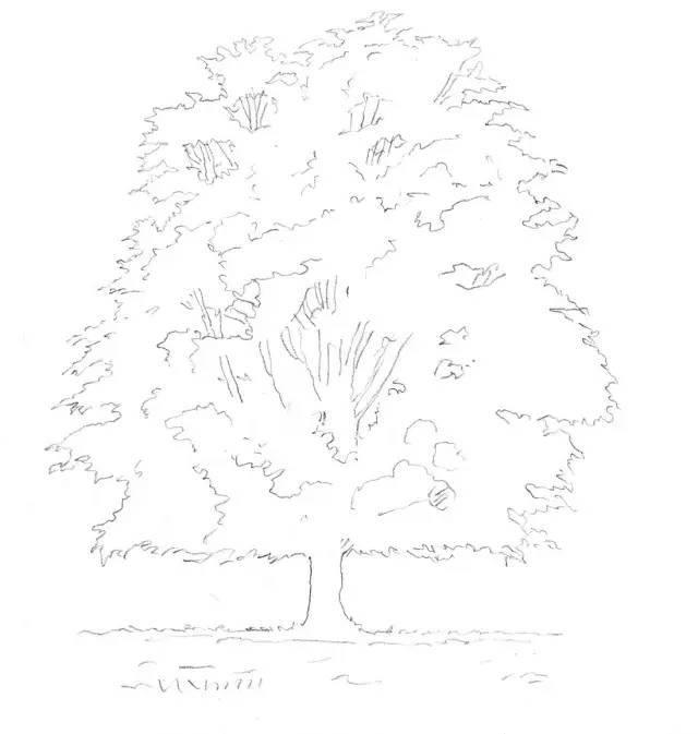 【素描入门】落叶树的绘画流程图片