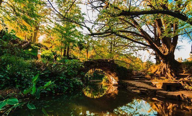 贵州省盘州石桥镇妥乐古银杏风景区--金色妥乐·世界古银杏之乡,位
