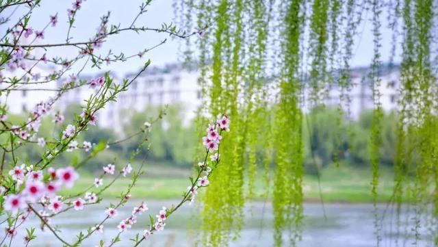 北国亦有春暖花开 有人说 春天的秀色是被燕子衔来的 春天的明媚是被