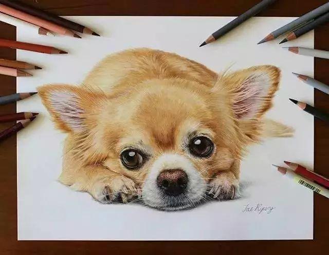 她画笔下的小动物跃然纸上非常有趣