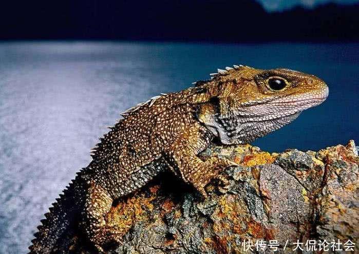 6种外貌怪异的古老动物, 第4种为唯一现存物种