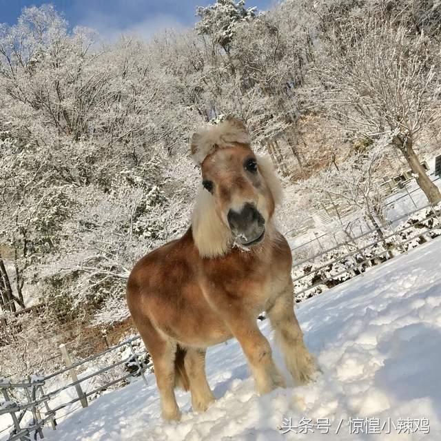 动物园奇迹萌照,猫头鹰可爱的眨眼表情竟然跟雪人完全