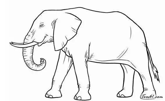 大象耳朵简笔画