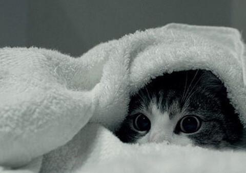 懒床的猫咪们,冬天就是不愿意起来,网友:让它多睡会吧