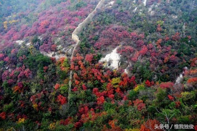 我在随州市随县太白顶风景区看红叶,来吧!
