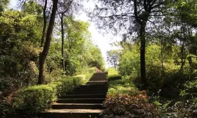 最美营地丨客乐得房车营地,享受山城重庆的森林康养漫步!