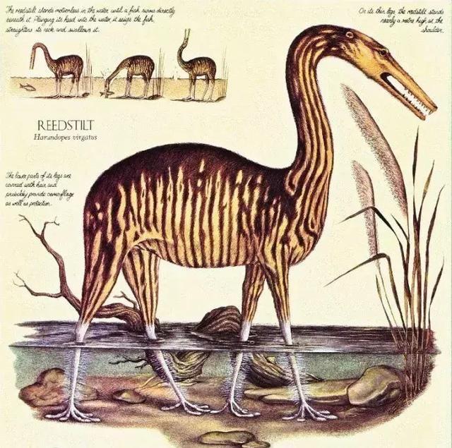 该生物拥有独特的颈部结构:一般哺乳动物有7节颈椎,而它有15节