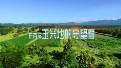 《我的青春在丝路》第六集 东帝汶玉米地的守护者