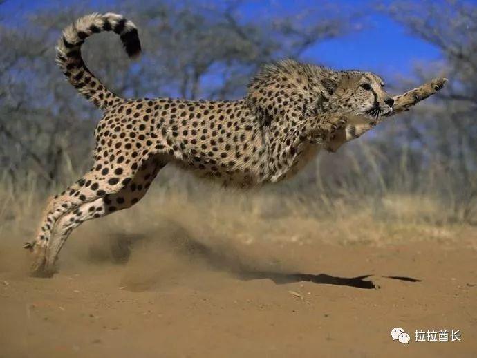 科普| 蹄类四肢动物与爪类四肢动物的前肢为什么弯曲的方向不一样?