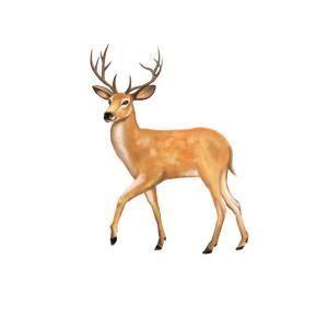 一种象征法国的动物