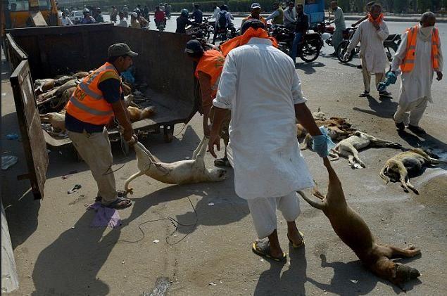 动物救援组织还表示,捕杀的这些无辜的流浪狗,其实是在掩盖人类的错误