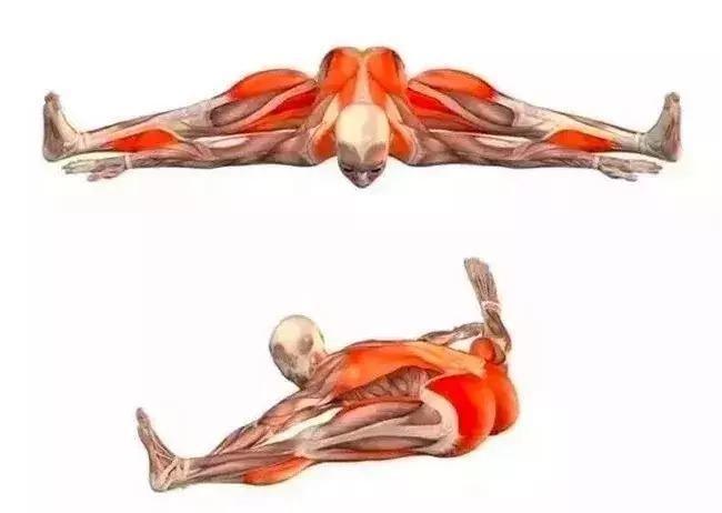 启动大腿内侧稳定腿向中线方向 启动大腿外侧压实地面 半鸽子式 拉伸图片