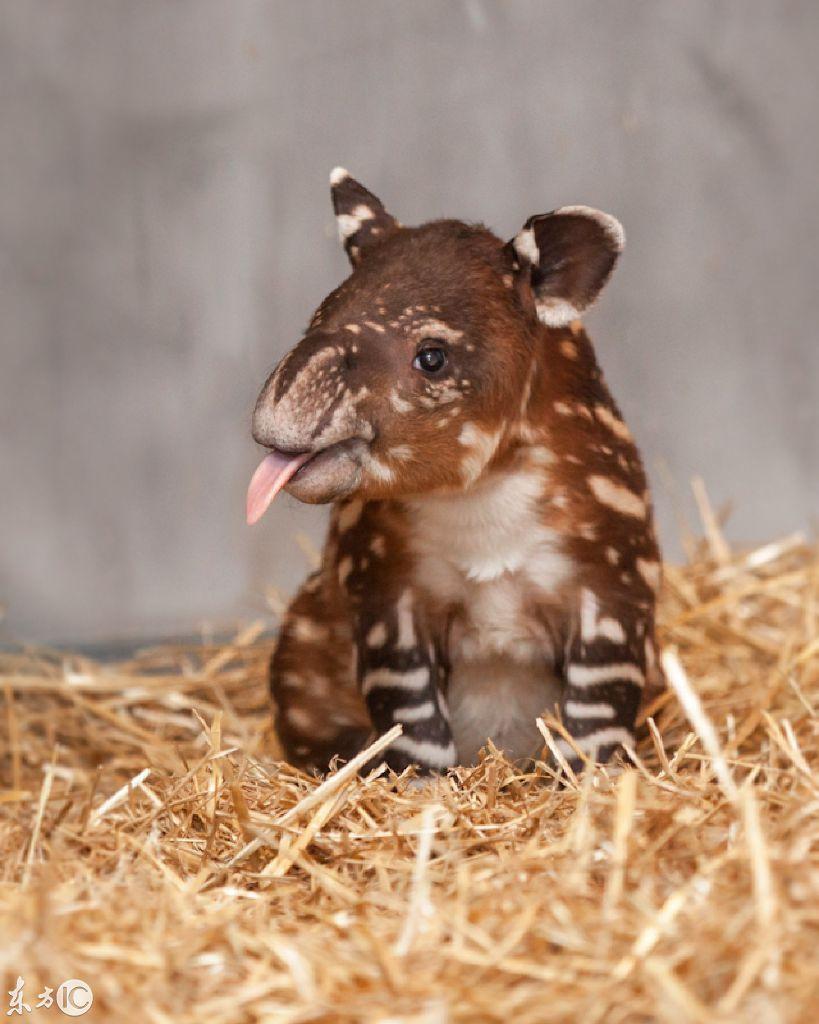 摄影人看世界:呆萌可爱的动物小宝宝 看完后真有抱回家的冲动