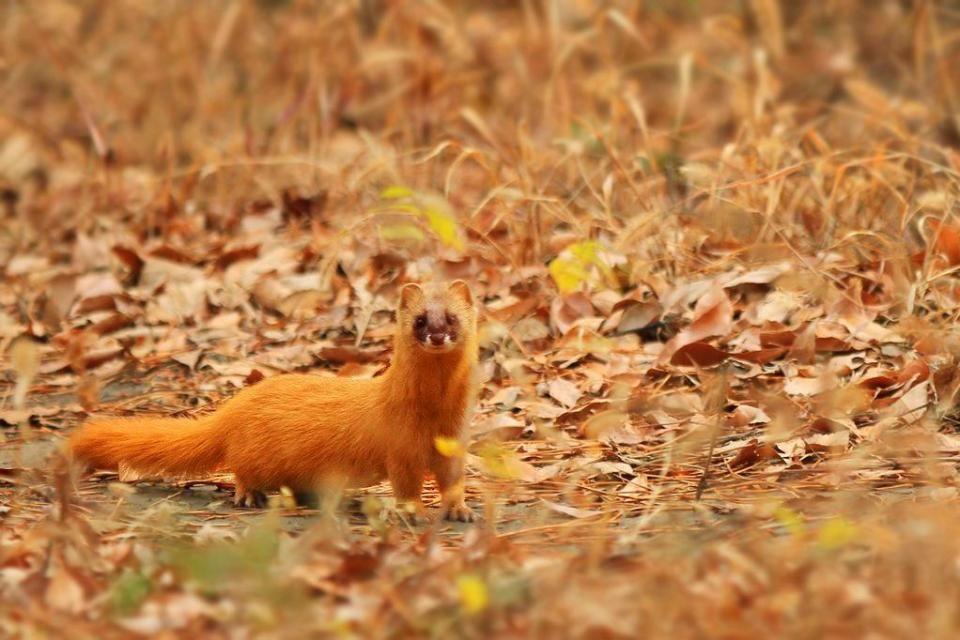 自然界脸皮最厚的动物:抢狮子食物的鬣狗,让乌龟背着的小蜗牛