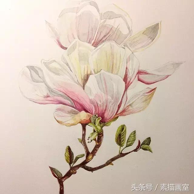 她画的彩铅花卉太美了!