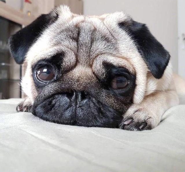 难受想哭的动物图片