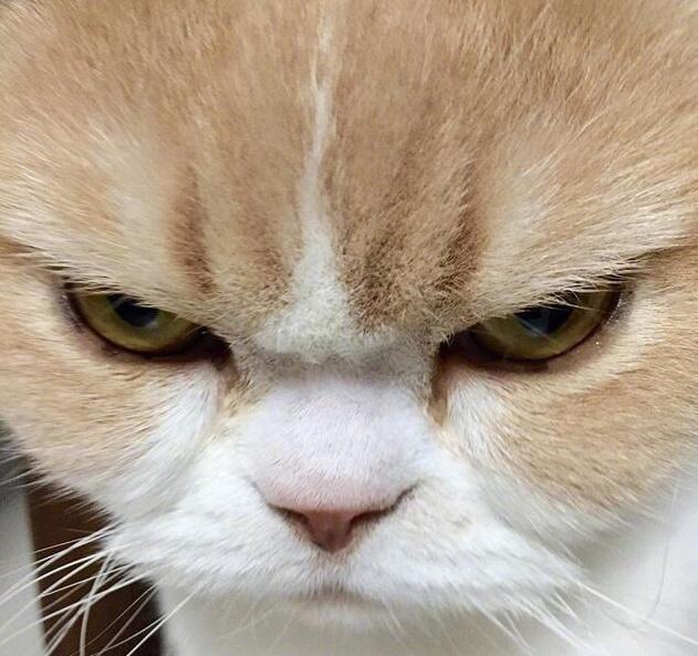眼神凌厉的猫界大佬!霸气的让人害怕,猫咪:别来惹我!