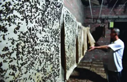 丹东一蚕房里,藏着这样的画面!图片