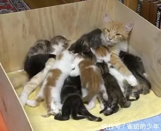 橘猫表情生了14个小猫崽喂奶时妈妈亮了:感觉小情s表包gif图片