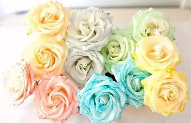 准备材料:白玫瑰,颜料,水 制作步骤:将不同的颜料倒入水中,将玫瑰花