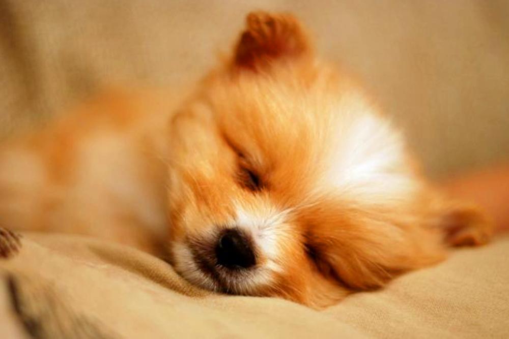 自家萌宠可爱睡姿,大大咧咧,萌翻了