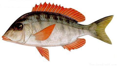 鱼和人是亲戚?侦破脊椎动物的演化史