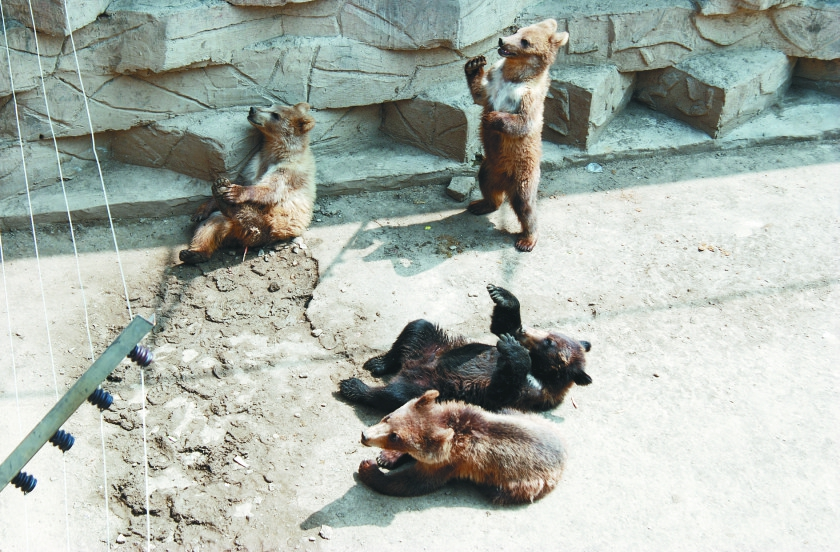 北方森林动物园的动物瑜伽来啦
