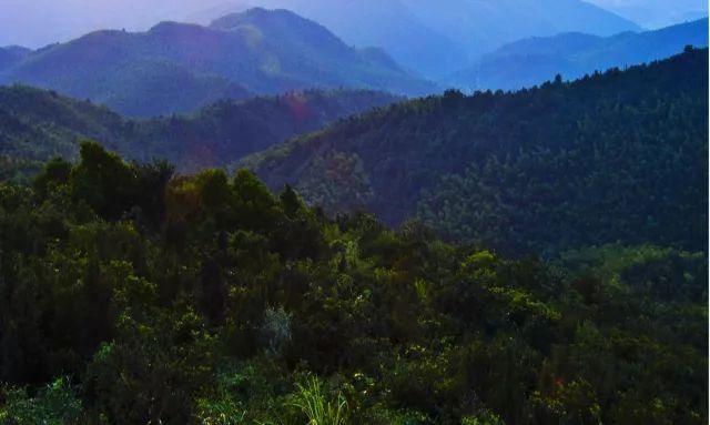 香山国家森林公园 罗晨摄
