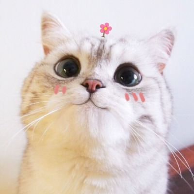 微信动物头像可爱萌宠小猫咪2018