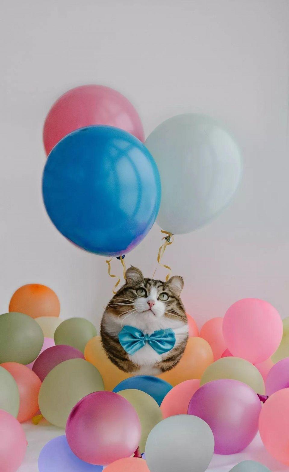 如果动物们都变成了球形的话…竟然毫无违和感是怎么回事