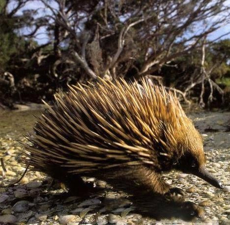 20种濒临灭绝的奇特物种