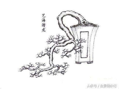 刘仲明大师手绘《岭南盆景百态图》