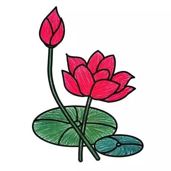 下面就一起来画一画荷花吧 荷花的莲子