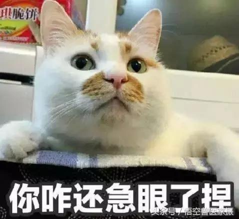 看到猫猫委屈的小表情,我又觉得自己做得还是过分了一点,吐完苦水