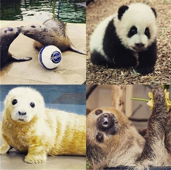 世界多个动物园和水族馆争相晒出本园或本馆最可爱小动物萌照(网页截