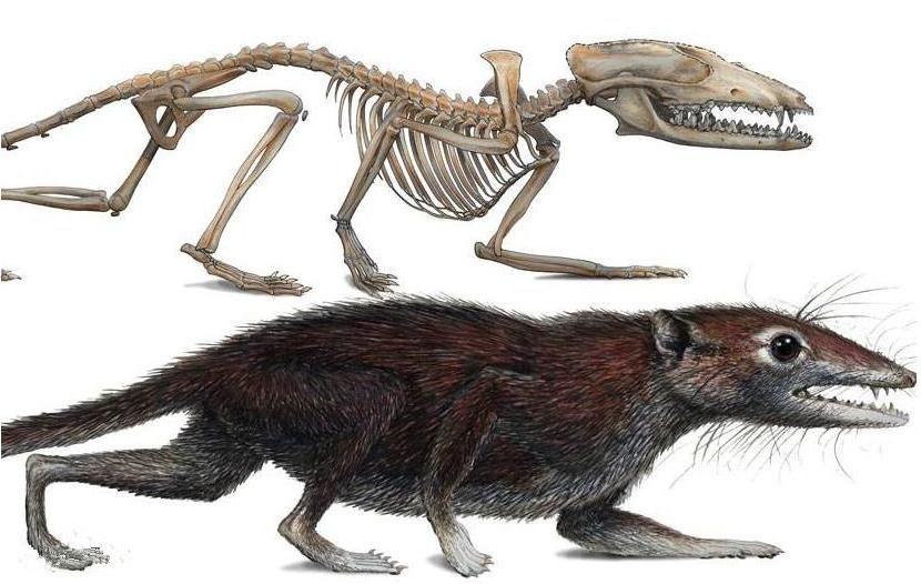 5种已灭亡史前动物,3种曾生活在中国