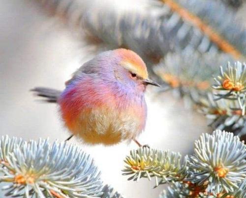 鸟儿简笔画加颜色